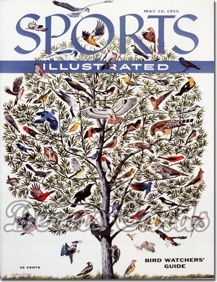 1955 Sports Illustrated   May 16  -  American Birds