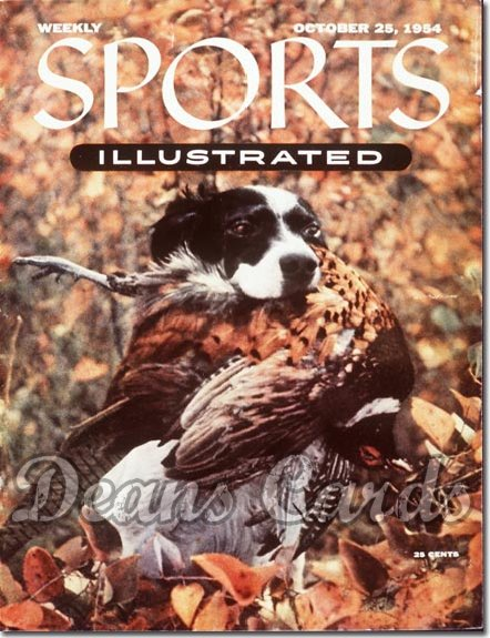 1954 Sports Illustrated   October 25  -  English Setter Dog Show