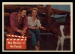 1956 Topps / Bubbles Inc Elvis Presley #49   New Member of the Family Front Thumbnail