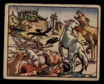 1938 Gum Inc. Horrors of War #99   Ghoulish Dogs Haunt the Ruins of China Front Thumbnail