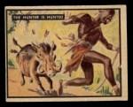 1950 Topps Bring Em Back Alive #35   Hunter Is Hunted Front Thumbnail