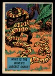 1957 Topps Isolation Booth #11   World's Largest Snake Front Thumbnail