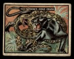 1950 Topps Bring Em Back Alive #80   The Python's Coils Crush Front Thumbnail