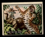 1950 Topps Bring Em Back Alive #67   Tiger On The Hunt Front Thumbnail