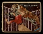 1950 Topps Bring Em Back Alive #86   Back To The Wild Front Thumbnail