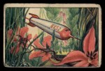 1951 Bowman Jets Rockets and Spacemen #42   Landing in Venusian Jungle Front Thumbnail