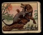 1950 Topps Bring Em Back Alive #74   Deadly Jaws Front Thumbnail