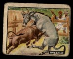 1950 Topps Bring Em Back Alive #78   Tiny Killer Front Thumbnail