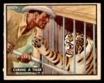 1950 Topps Bring Em Back Alive #81   Curing Tiger Front Thumbnail