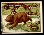 1950 Topps Bring Em Back Alive #71   Race With Python Front Thumbnail