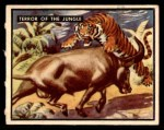 1950 Topps Bring Em Back Alive #73   Terror Of The Jungle Front Thumbnail