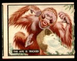 1950 Topps Bring Em Back Alive #57   The Ape Is Tricked Front Thumbnail