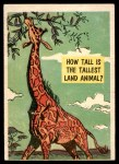1957 Topps Isolation Booth #22   Tallest Land Animal Front Thumbnail