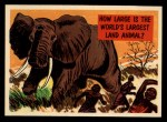 1957 Topps Isolation Booth #21   World's Largest Land Animal Front Thumbnail