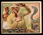 1950 Topps Bring Em Back Alive #59   The Deadly Cobra Strikes Front Thumbnail