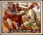 1950 Topps Bring Em Back Alive #95   An Ape Takes The Count Front Thumbnail