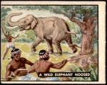 1950 Topps Bring Em Back Alive #83   Wild Elephant Noosed Front Thumbnail